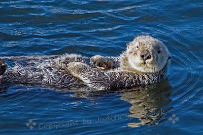 Hello Ms. Otter - Judith Sparhawk