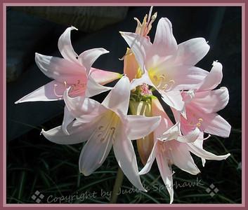 A Bunch of Lilies - Judith Sparhawk
