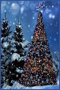 The Christmas Forest - Judith Sparhawk