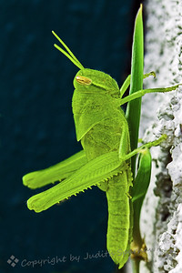 Grasshopper Green - Judith Sparhawk
