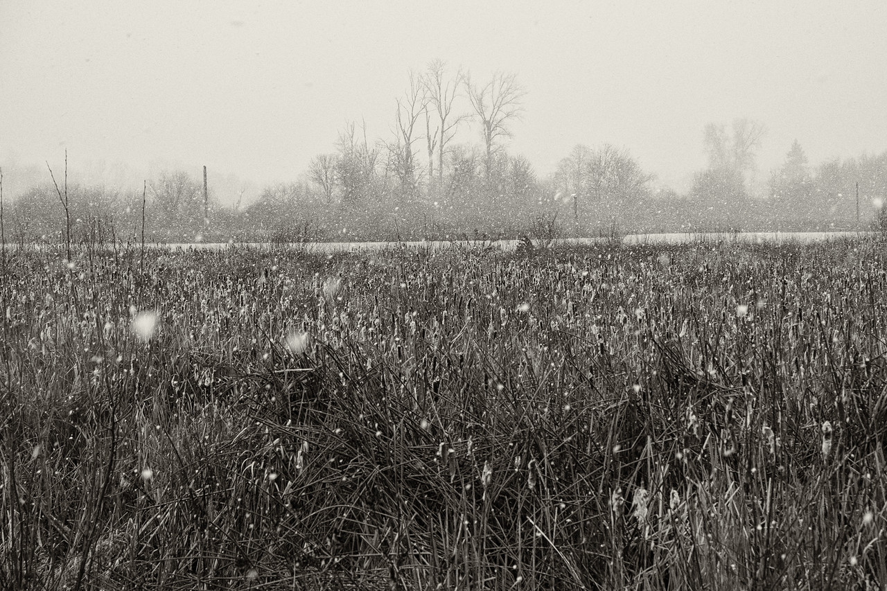 Fernhill Wetlands Snow