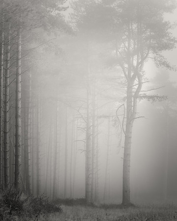Forest #4