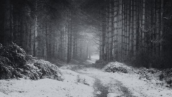 The Forest in Winter
