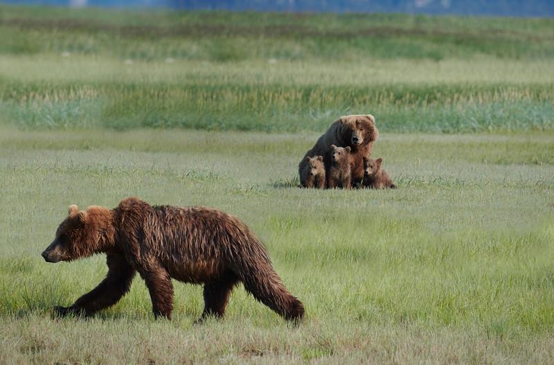 Older Cub Returning to His Mom
