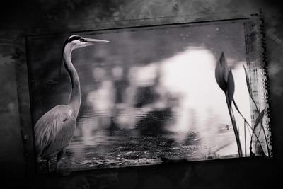 FL_MG_0731_13 framed