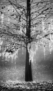 FLA__12_MG_1955