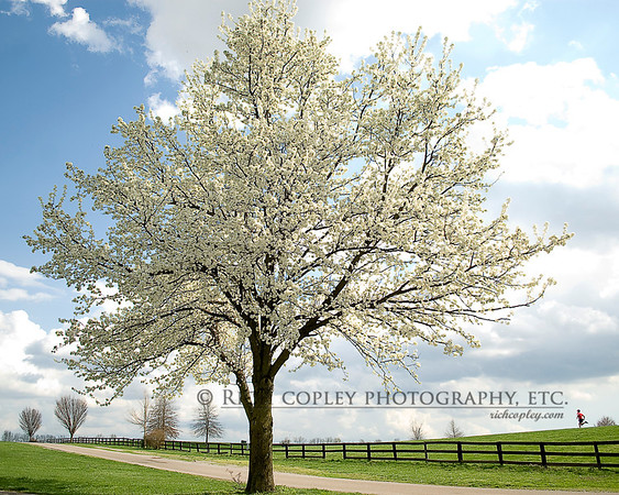 March 18, 2012 - 3:30 p.m., Masterson Station Park, Lexington, Ky. (94/366).