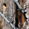 Chestnut-backed Chickadee, McCall, Idaho