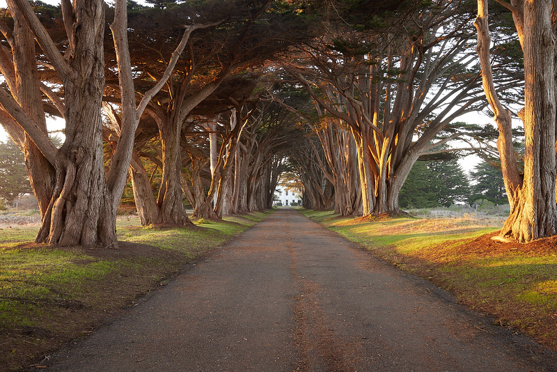 Cypress Tunnel at Sunset