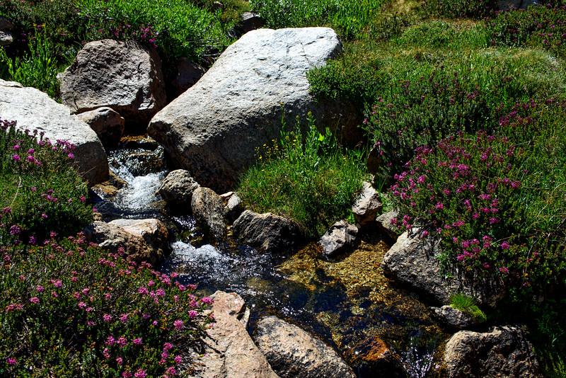 Heather by Mountain Stream, Yosemite