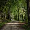 Along The Narrow Way