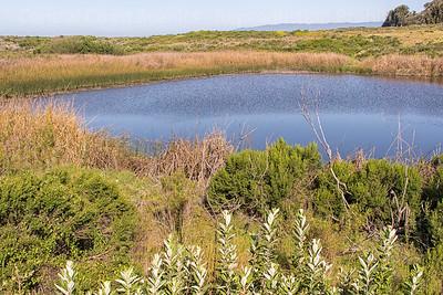 Dune Swale Pond 1