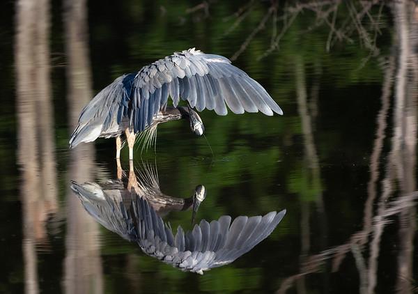 Mirror heron_DSC0020