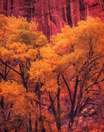 Red Cliff, Autumn Trees