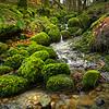 A tiny stream
