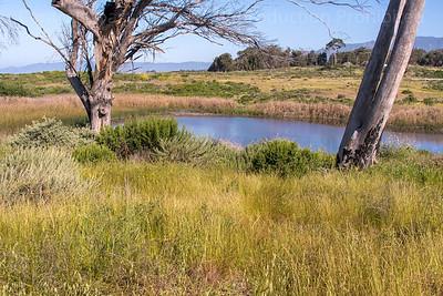 Dune Swale Pond 2