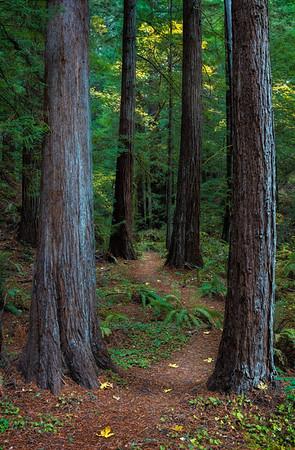 Heritage Grove, CA