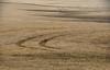 Wheat Trails