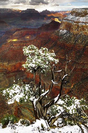 Snow Tree, Powell Point