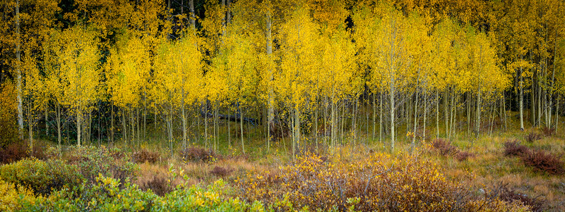 Fall colors in McCullough Gulch, Breckenridge, CO.