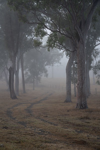 Foggy Queensland morning at Upandowns Ranch