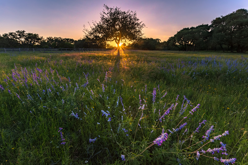 Blue Sage Sunset