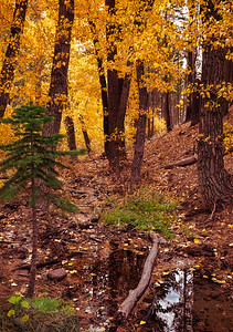 Galena Creek, NV