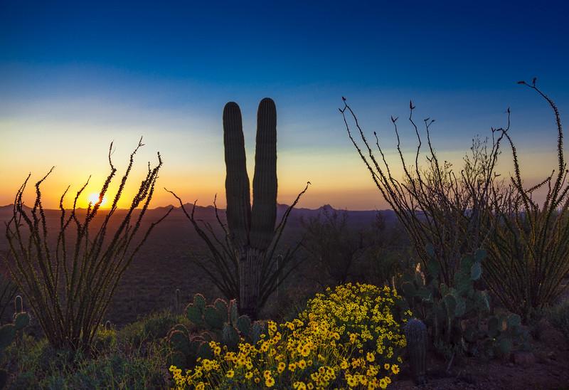 Peaceful Sonoran Sunset