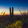 Peaceful Sonoran Sunset