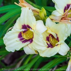 015-flower_lily-ankeny-11jul21-09x09-006-400-3686