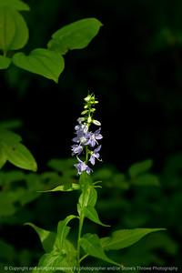 015-flower-wdsm-16jul20-08x12-008-400-7309