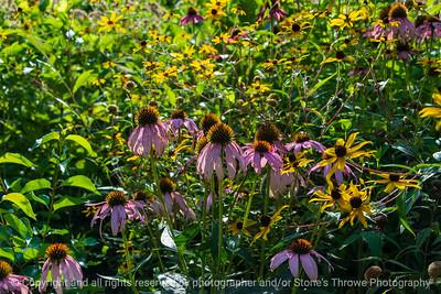 015-wildflowers-wdsm-13aug21-12x08-008-400-4148