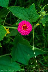 015-flower-ankeny-30jul20-08x12-008-400-7415