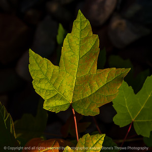 015-leaf-ankeny-11jul21-09x09-006-400-3741
