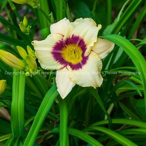 015-flower_lily-ankeny-28jun21-09x09-006-400-3284