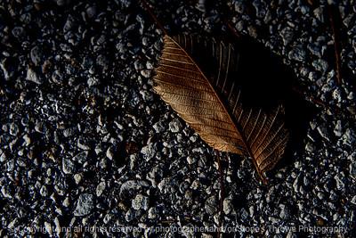 015-leaf_autumn-wdsm-04nov20-12x08-008-400-8879
