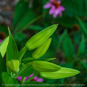 015-flower_bud-ankeny-04jul21-09x09-006-400-3342