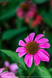 015-flower-ankeny-11jul20-08x12-008-400-7192