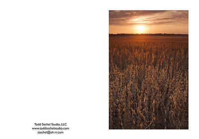 09292012_9832 Soy Bean Sunrise - Vermilion, Ohio