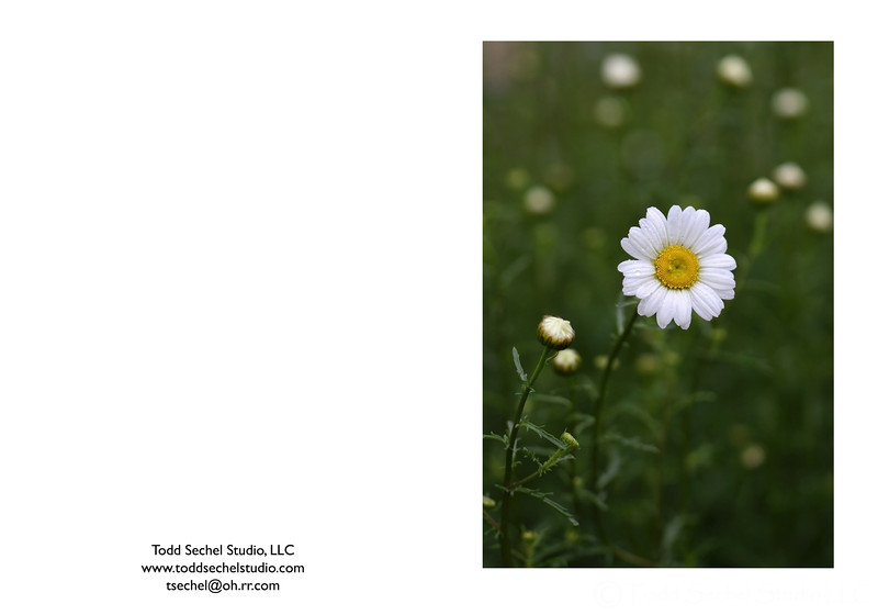 05282009_4288 - Schoepfle Garden