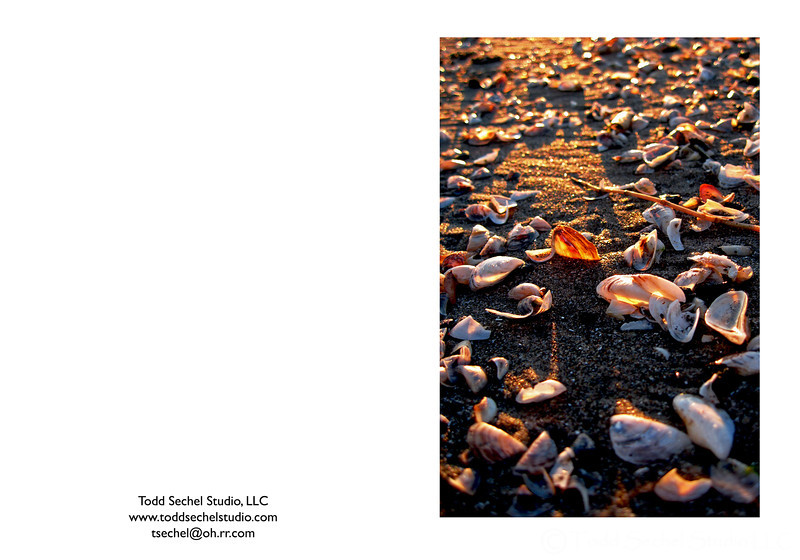 11012007_418 Lake Erie Shells - Nickelplate Beach - Huron, Ohio