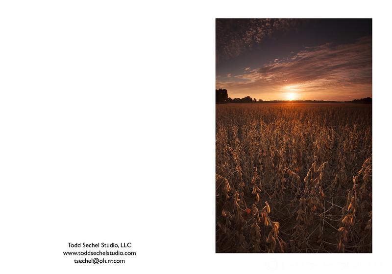 09292012_9825 Soy Bean Sunrise - Vermilion, Ohio