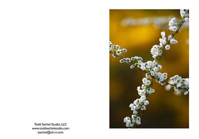 04302008_435 Nature's Crucifix - Schoepfle Garden - Birmingham. Ohio