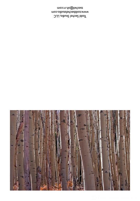 10122006_23 Aspen Trees - Avon, Colorado