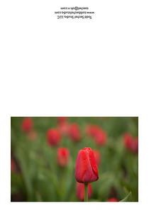 04022012_2628 - Red Tulips - Schoepfle Garden - Birmingham, Ohio