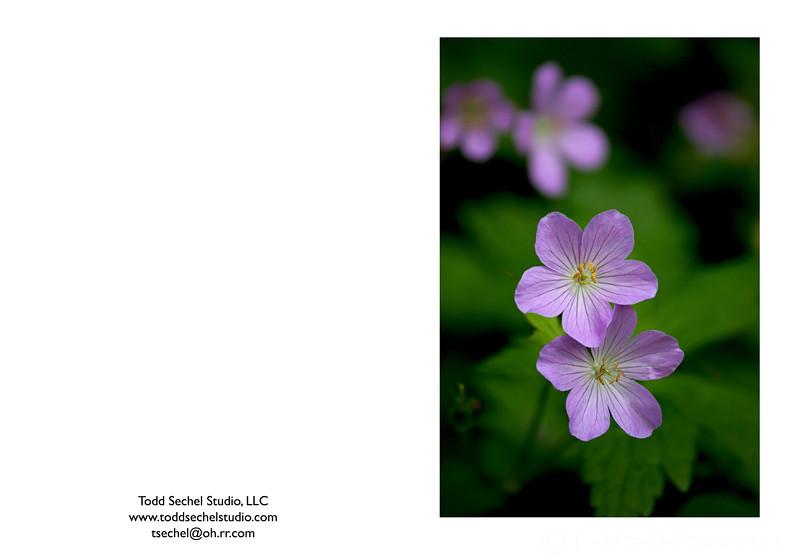 05222008_039 - Schoepfle Garden - Birmingham, Ohio