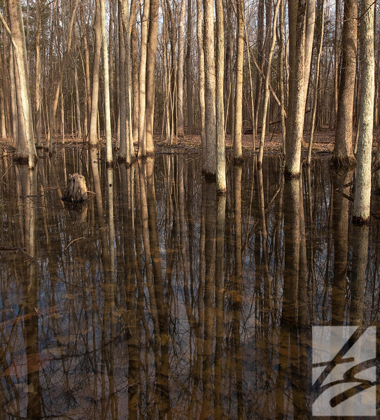 "(62) - Beneath the Surface - Findley State Park -Wellington, Ohio - 42"" x 38"" metal print Was $700 - now $350"