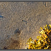 Slow paths <br /> Snail tracks on dry seabed at ebb tide, Mjelle, Nordland