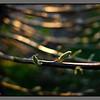 Spring twigs II<br /> Værøy