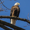 The eagles seemed very tolerable to our presence as there were 4 wheelers buzzing around across the river too.